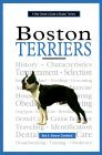 A New Owner's Guide to Boston Terriers