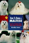 Guide to Owning a Maltese