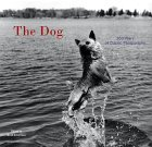 The Dog by Ruth Silverman