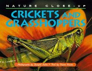 Crickets And Grasshoppers (Nature Close Up)