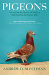 Pigeons by Andrew D. Blechman
