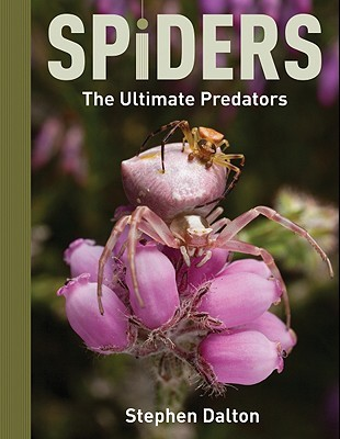 Spiders by Stephen Dalton