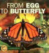 From Egg to Butterfly (Start to Finish)